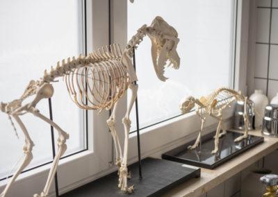 tierarztpraxis-maeusl_praxiseindrücke12