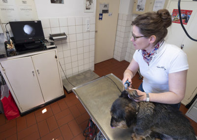 tierarztpraxis-maeusl_praxiseindrücke18